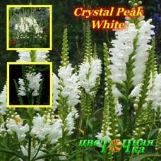 Физостегия Crystal Peak White